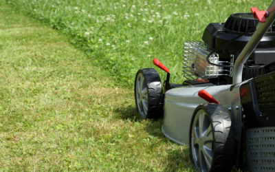 7 Common Lawn Care Mistakes to Avoid